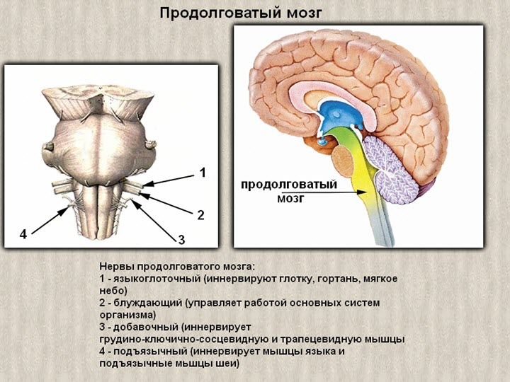 Az oszteokondrozissal nő a nyomás - Osteochondrosis -