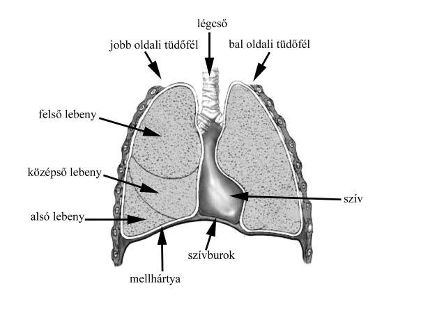 rauwolfia kígyó magas vérnyomásban kalcium d3 magas vérnyomás esetén