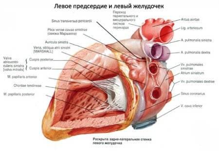 a hipertóniával járó szív hipertrófiája