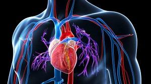 a vese magas vérnyomásának kezelése népi gyógymódokkal