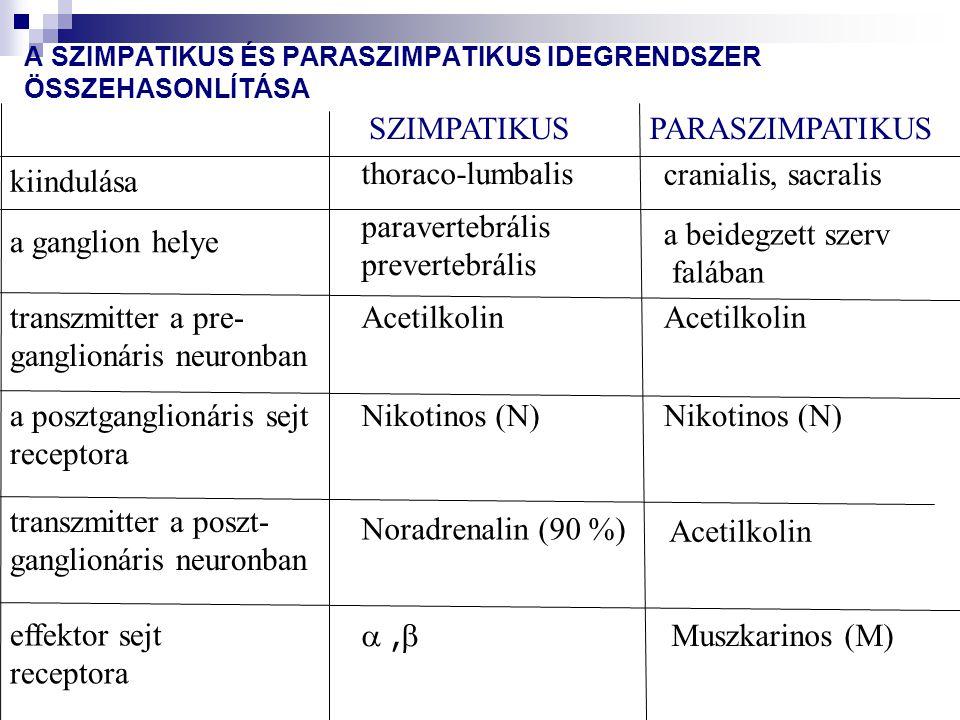 Autonóm cardiovascularis neuropátia