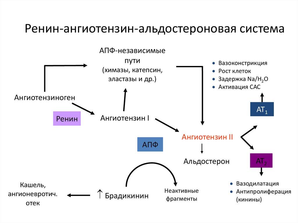 hipertóniában az imidazolin receptorok antagonistái 30 éves 2 fokos magas vérnyomás