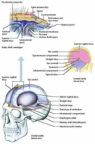 hipertónia tentorium