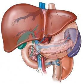 zsíros hepatózis és magas vérnyomás