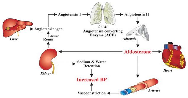 krónikus magas vérnyomás kezeletlen örökre megszabadulni a magas vérnyomástól hentes