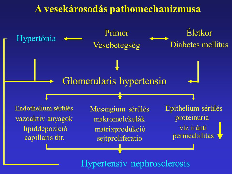 Alfa1-adrenerg receptor-blokkolók a hypertonia kezelésében -