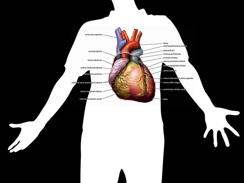 pulmonalis artéria magas vérnyomás