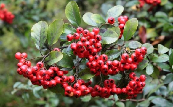 növényi magas vérnyomás