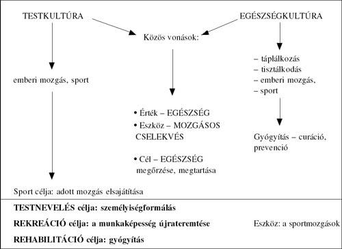 Reumás láz tünetei és kezelése - HáziPatika