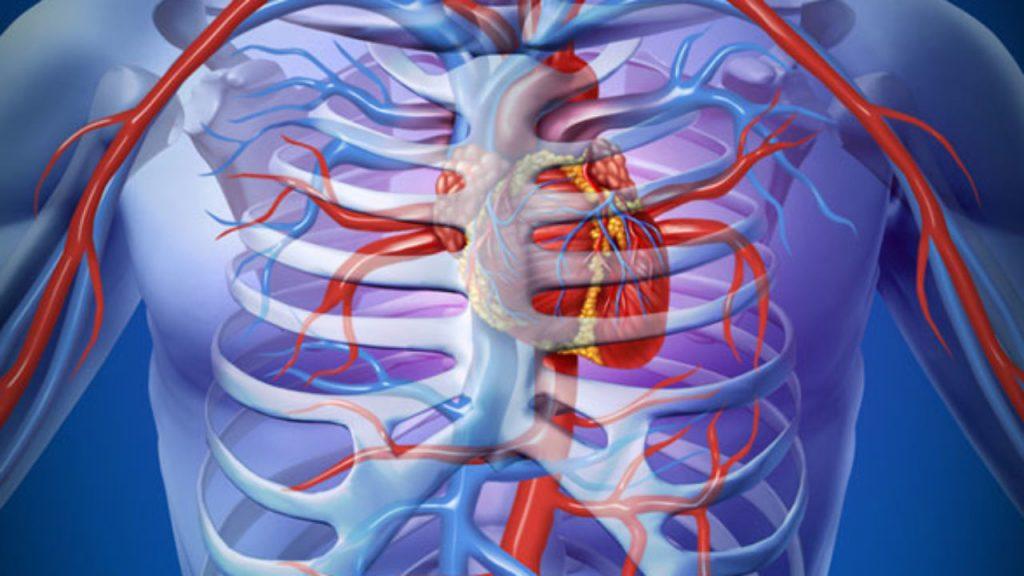 a hipertónia kialakulásának fő tényezői