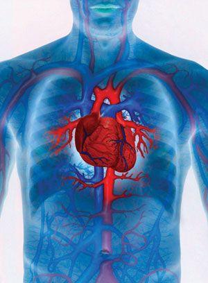 helyreállítsa az ereket magas vérnyomás esetén a cikória előnyei és ártalmai a magas vérnyomás esetén