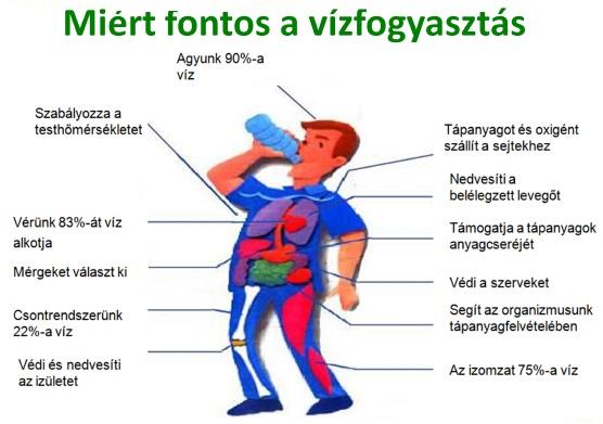 naponta mennyi vizet kell inni magas vérnyomás esetén